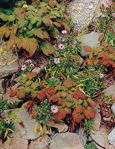 Asters and Raspberries, Oak Island, Maine, 1973, Porter