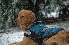 Joy Alfandre - Golden in the Snow