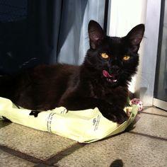 Rai #blackcat