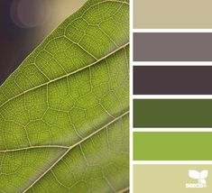 Handsome, pleasing palette for a high Depth value with a more masculine vibe. | leaf tones via Design-Seeds | commentary via The Voice Bureau at AbbyKerr.com