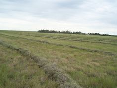 First time haying the pasture from The Prairie Homestead.