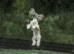 Jumping for Joy by Jim Zuckerman   (Comedy Pet Photography Awards)  via @AOL_Lifestyle Read more: https://www.aol.com/article/news/2017/09/21/pets-put-their-funniest-faces-forward-for-a-one-of-a-kind-competition/23217282/?a_dgi=aolshare_pinterest#fullscreen