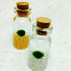 DIY mini Marimo moss ball habits!  northwestkombucha.com