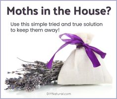 Moths in house? This tried and true solution works, is inexpensive, and simple to make. Make the sachets, and place them where you have wool in your home! Moths In House, Getting Rid Of Moths, Moth Repellent, Natural Moth Repellant, Best Pest Control, Weed Control, Natural Pesticides, Pest Management, Beneficial Insects