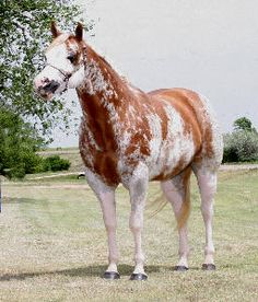 Paint Splash horse
