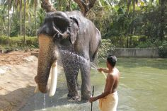 Elephant Camp at Guruvayur, India