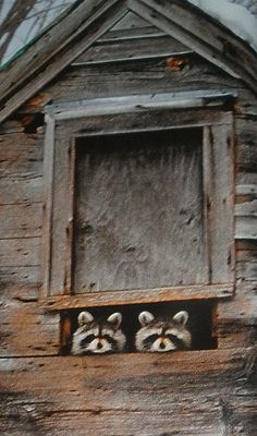Racoons in New Hampshire