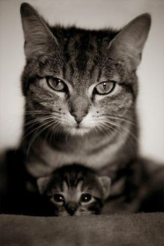 such a good capture of momma and kitten