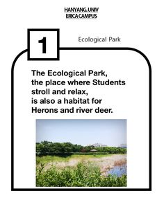 Ecological park in ERICA campus  #eco #park #ecological #erica #campus #hanyang