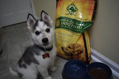 So many of you already know I love TLC Pet Food from my review with 8 year old Gracie and the 10 Things I Love About TLC Pet Food.  However, I also wanted to share with you how Echo is liking the f…