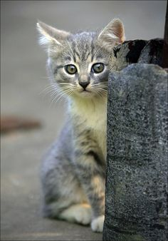 """""""You will always be lucky if you know how to make friends with strange cats."""" --English Proverb"""