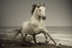 wild horses | Wild Horses HD Wallpapers | HDWallpapers360.com - High Definition ...