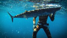 The BIGGEST Wahoo I've ever seen + how to get better at spearfishing!