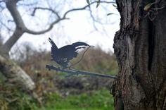 Bekijk nu ons assortiment Metalen Vogel Silhouetten van Metalbird. Van verre vogels tot het bekende Roodborstje. Je ziet ze vliegen in onze Webshop!