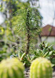 #succulents #succulentlovers #cactus #cactuslovers #minigarden