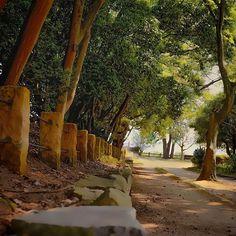 【take3_fu】さんのInstagramの写真をピンしています。《#明石 #公園 で撮った #木 。🌿 #森 #林 #葉 #幹 #wood #forest #leaf #緑 #green #park #nature #自然 #leaf》