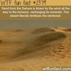 Who knew? Awesome.