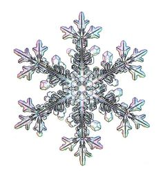 Real Snowflakes | Real Snowflakes have 6 points and no two are alike; each unique...kind ...