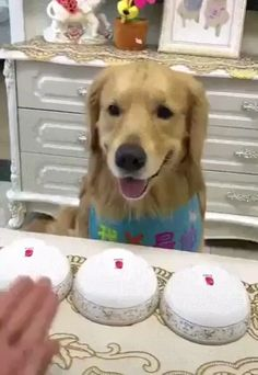 Doggo picked the bowl with the least treats Cute Funny Dogs, Funny Vid, Cute Funny Animals, Cute Baby Animals, Animals And Pets, Cute Animal Humor, Funny Animal Memes, Dog Memes, Funny Animal Videos