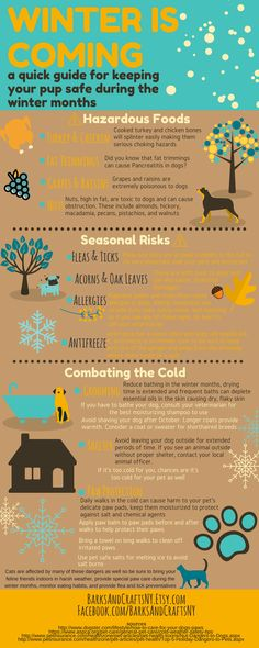 Winter Pet Care   #doginfographic #infographic #winteriscoming #winterpetcare #petcare #winterdog #wintertips #PetTips #petadvice #pawbutter #pawbalm Pet Care Tips, Dog Care, Pancreatitis In Dogs, Dog Safety, Safety Tips, Pet Life, Pet Health, Happy Dogs, Peta