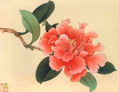 Piones Flowers, Peony Flower, Japan Painting, Silk Painting, Botanical Illustration, Botanical Prints, Chinese Wallpaper, Art Projects For Adults, Oriental Tattoo