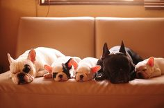 After photo shoot --- everybody sleeps! The puppy ears are soooo sweet and pink!