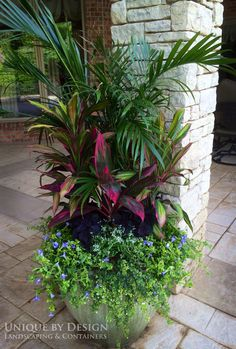 It only stands to reason that for any successful venture in organic container gardening, one would need organic soil. A regular, outdoor garden begins with Container Flowers, Container Plants, Container Gardening, Outdoor Planters, Garden Planters, Outdoor Gardens, Tropical Landscaping, Yard Landscaping, Landscaping Ideas