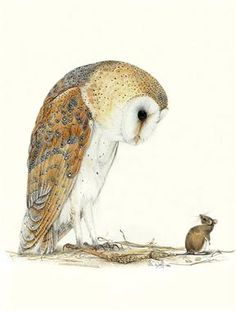 barn owl and mouse. watercolor by colin woolf.