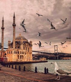 (notitle) – nedret karadağ – Join the world of pin Istanbul City, Istanbul Travel, Beautiful Mosques, Hagia Sophia, Islamic Architecture, Turkey Travel, Beautiful Places In The World, Best Places To Travel, Pictures To Paint