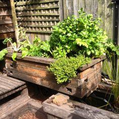 Aquaponics veggie bed from milkwood.net