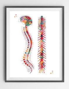 Spine watercolor print Watercolor print