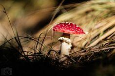 Red Hat by Rico Radau