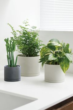 Plant Pot 191 fits naturally in minimalist spaces, with its clean silhouette and dry textured glaze. It is perfect for showcasing plants such as cacti with strong vertical movement. Shop at 2Modern.