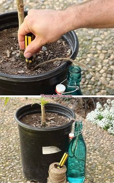 simple watering strategy for vacations or forgetfulness haha ~ in Spanish. Water Plants, Water Garden, Lawn And Garden, Indoor Garden, Garden Plants, Diy Self Watering Planter, Garden Watering System, Container Gardening, Gardening Tips