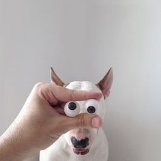 Funny Dog - Jimmy Choo the Bull Terrier Illustrations by his Owner Rafael Mantesso Perros Bull Terrier, Chien Bull Terrier, Funny Dogs, Cute Dogs, Funny Animals, Cute Animals, Bull Terriers Anglais, English Bull Terriers, Love My Dog