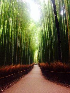 Silence&Bamboo