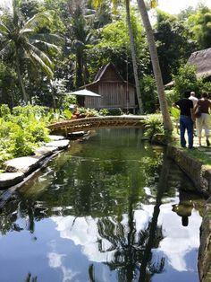 Natural swimming pool @bamboo indah