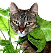 Houseplants | House Plants Safe For Cats - Pets And House Plants