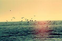 kuş kadardı kalbimmm