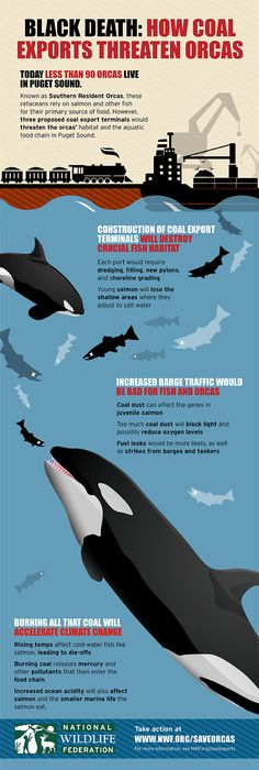 Help Save the Northwest's Endangered Orcas from Dirty Coal! http://onegr.pl/PbYnOB #orcas #whales