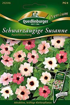 Schwarzäugige Susanne Pastellmischung von Quedlinburger S... http://www.amazon.de/dp/B01B2D5SKU/ref=cm_sw_r_pi_dp_nsqkxb061JQMM
