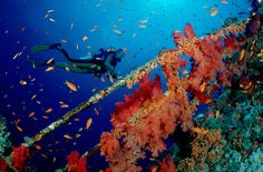 Are you an aspiring diver? Check out these amazing dive locations: http://tandl.me/1NwiUGQ
