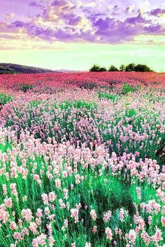 Image via We Heart It #beautifulnature #nature #photography
