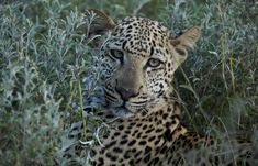 African Safari, Family Holiday, Tanzania, Conservation, Photograph, House, Animals, Photography, Animales