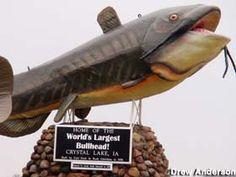 Fish - World's Largest Bullhead in Crystal Lake, Iowa: