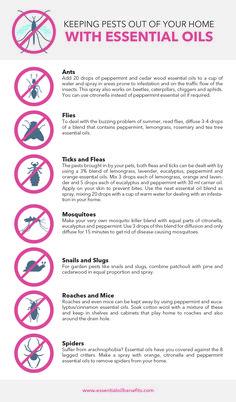 pests control with essential oils No more Find out how to use for pests control.No more Find out how to use for pests control. Essential Oil Spray, Essential Oils Cleaning, Essential Oil Blends, Mosquito Repellent Essential Oils, Essential Oils For Fleas, Bug Spray Recipe, Homemade Bug Spray, Diy Pest Control, Bees And Wasps