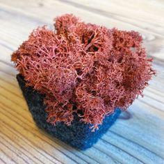 Der natürliche Schallabsorber aus skandinavischem Rentiermoos gibt es in diversen Farben. Die Pixel sehen aus wie kleine Blumentöpfe. Wobei der anthrazitfarbene Topf gefilzt und das handgepflückte Moos sorgfältig hineingelegt ist. Small Flower Pots, Acoustic, Colors