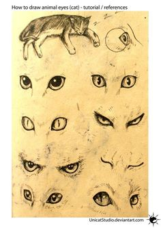 Drawing Eyes Animal Eyes Tuto by UnicatStudio on deviantART - Drawing Techniques, Drawing Tips, Drawing Sketches, Painting & Drawing, Drawing Ideas, Sketch Ideas, Pencil Sketching, Matte Painting, Drawing Lessons