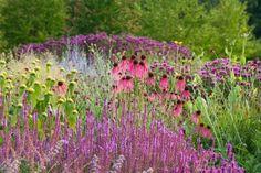 Vaste planten border van Piet Oudolf, met onder andere Echinacea en Salvia