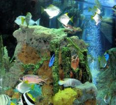 Saltwater Aquarium Fish - Find incredible deals on Saltwater Aquarium Fish and Saltwater Aquarium Fish accessories. Let us show you how to save money on Saltwater Aquarium Fish NOW! Marine Aquarium Fish, Saltwater Aquarium Fish, Marine Fish, Acrylic Aquarium, Diy Aquarium, Salt Water Fish, Salt And Water, Ocean Photos